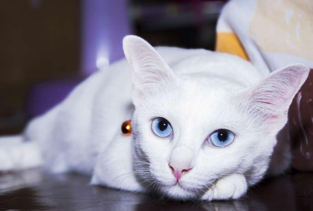 アクアの猫の目