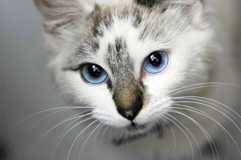 メラニン色素の量が非常に少ないブルーの目