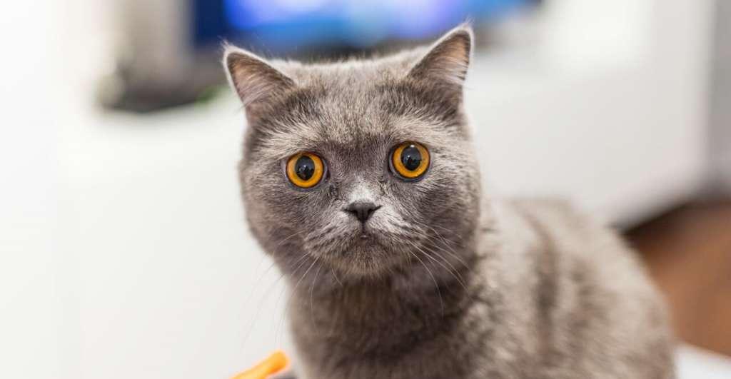 カッパーの猫の目