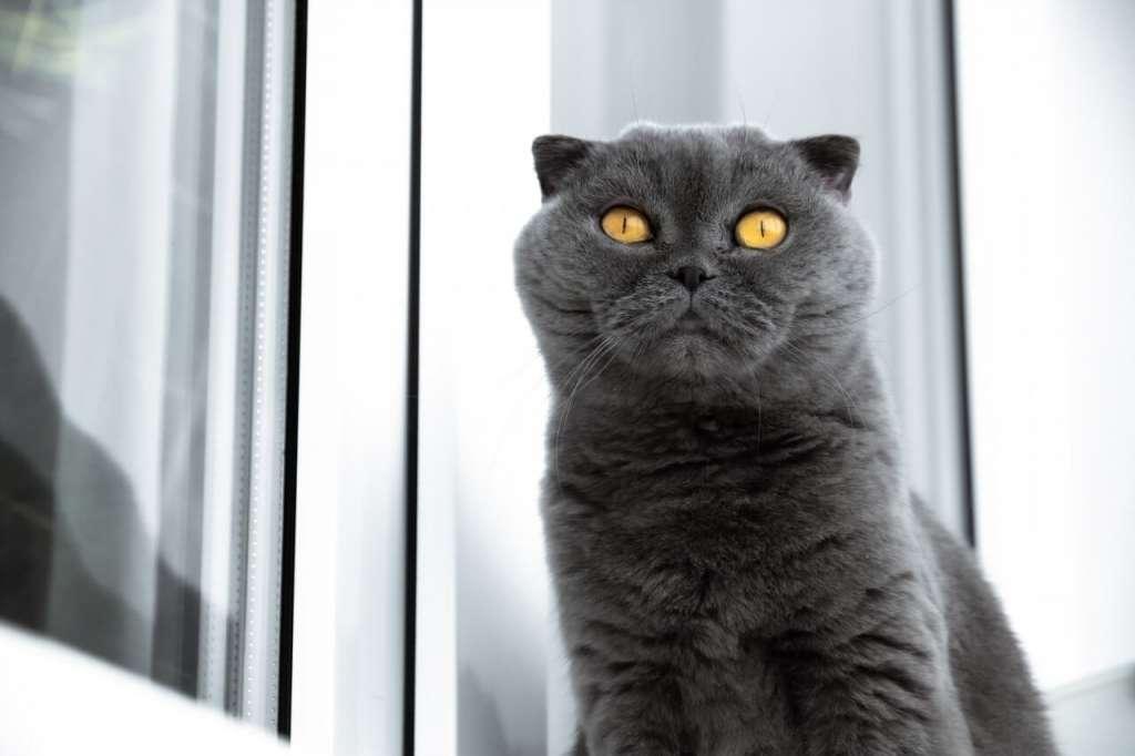 ゴールドの猫の目