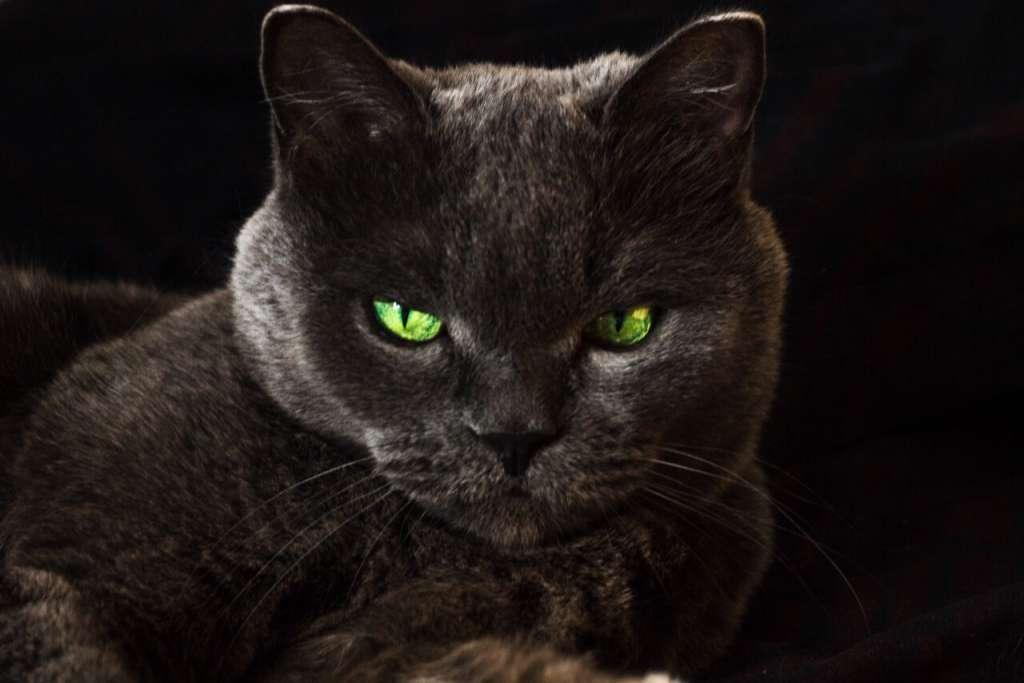グリーンの猫の目