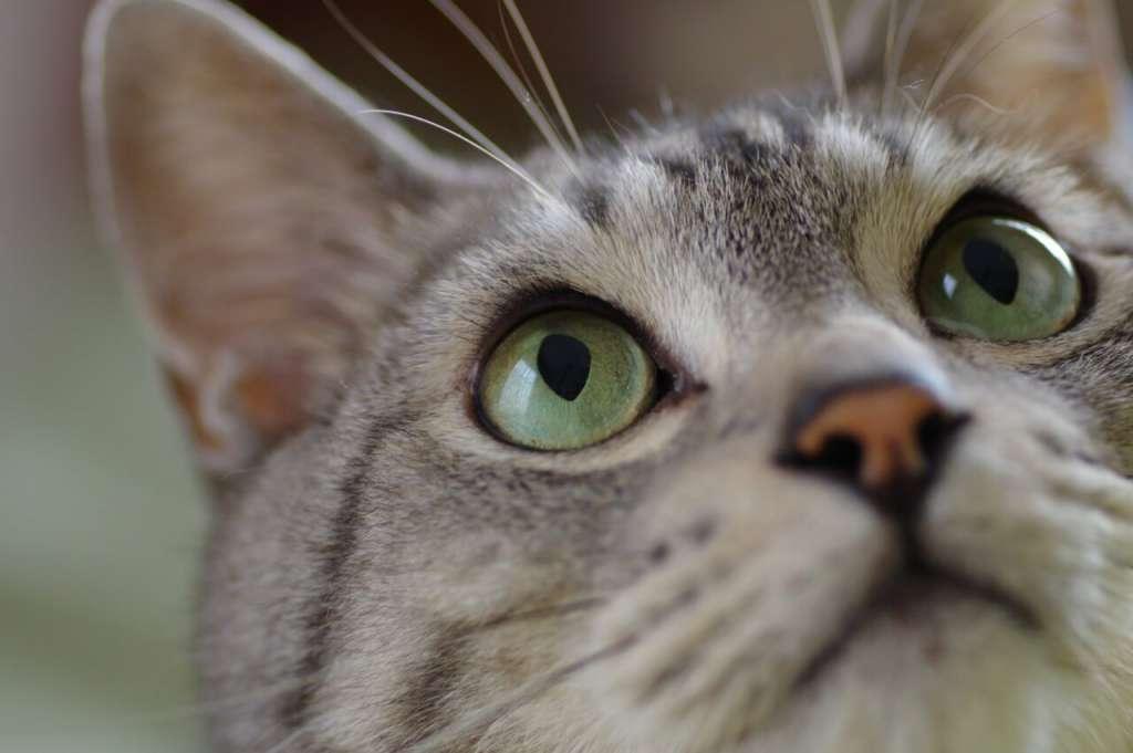 ヘーゼルの猫の目