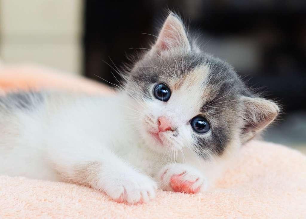 子猫の目の色はブルー