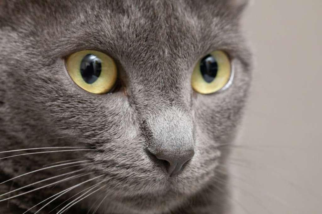 猫 毛色 種類