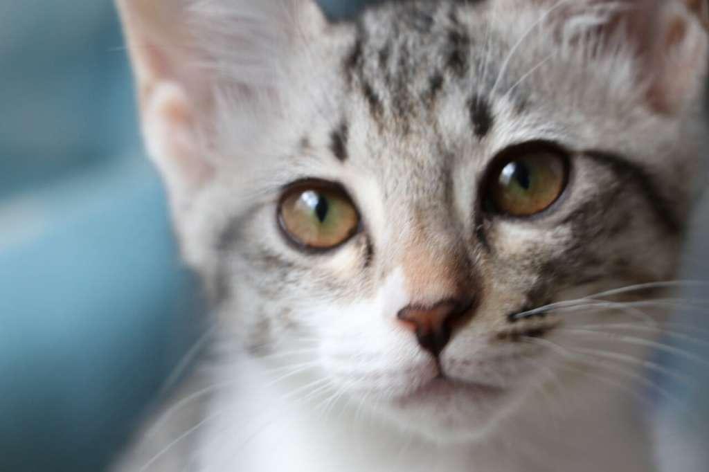 オレンジの猫の目