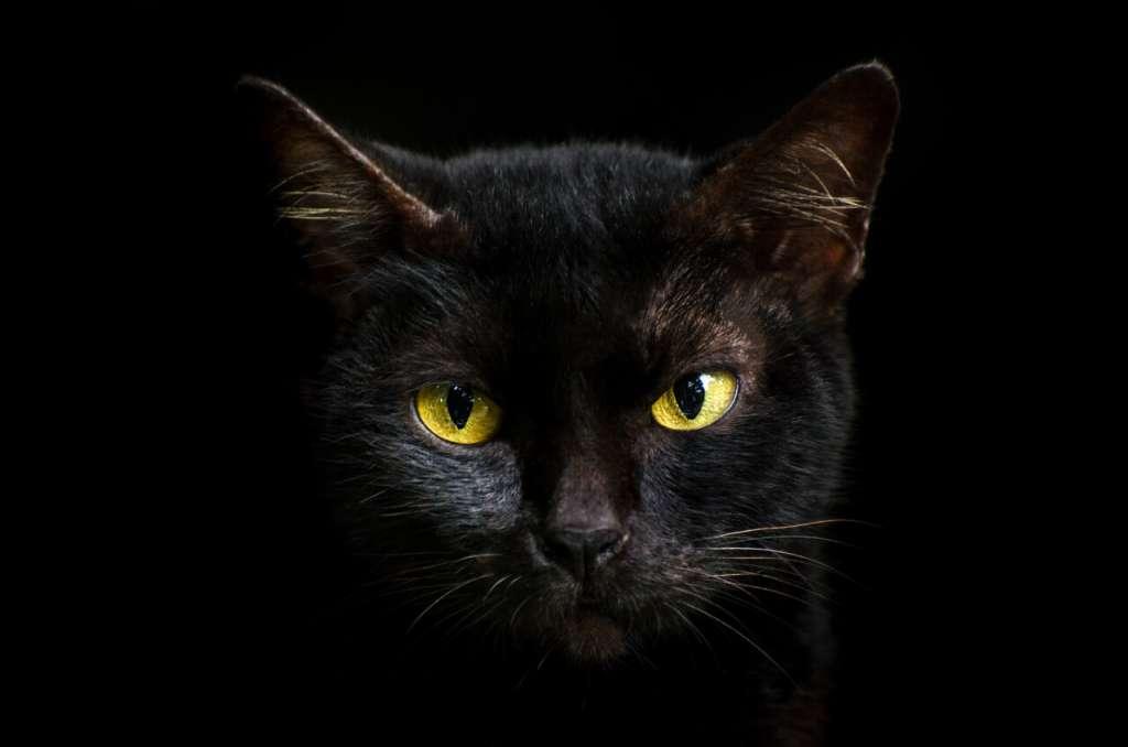 イエローの猫の目