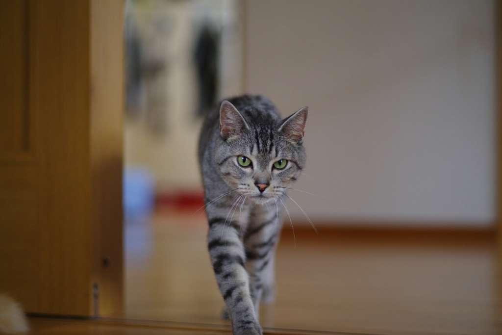 なぜ猫は、けんかをするのか?猫は縄張りを作って生活している