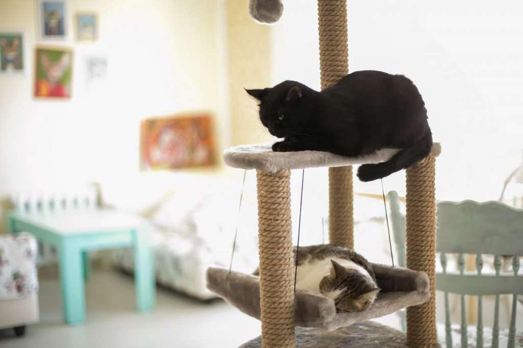 猫のけんかのルール。猫は縄張りの中では強気であり、高い位置にいる猫ほど上