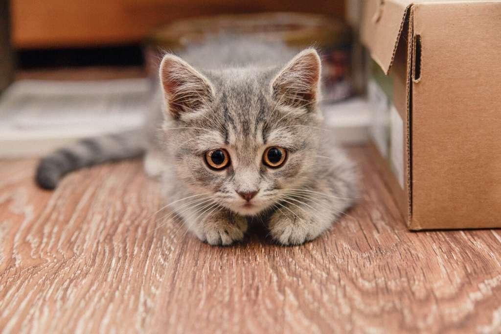 不安で心細い猫は鳴き続けることがあります