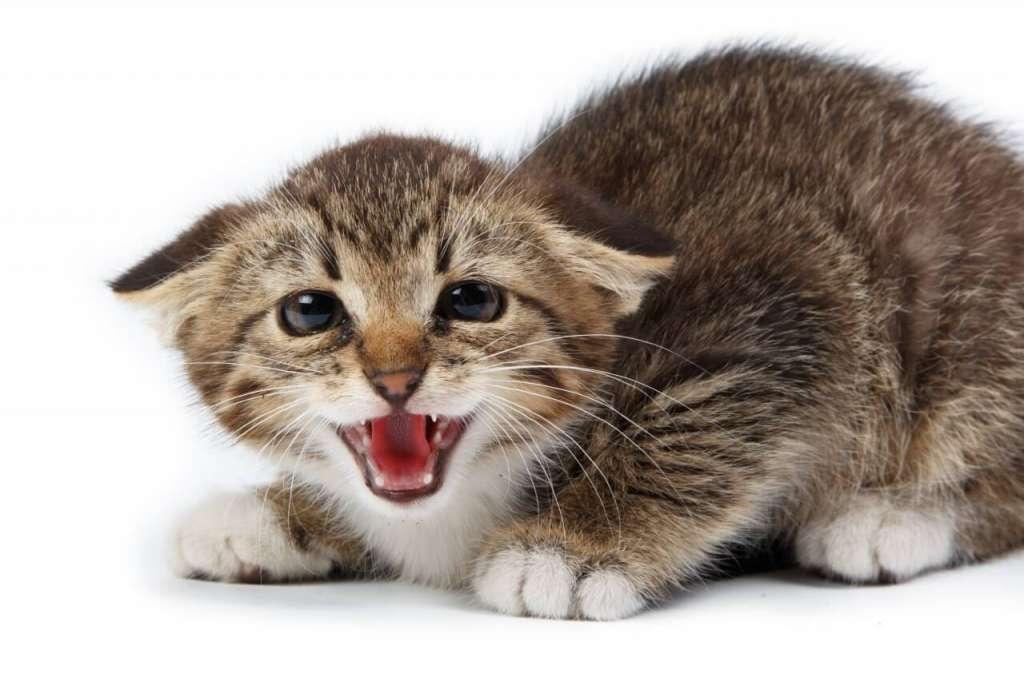 猫の鳴き声がうるさい!? その原因と対処法とは?
