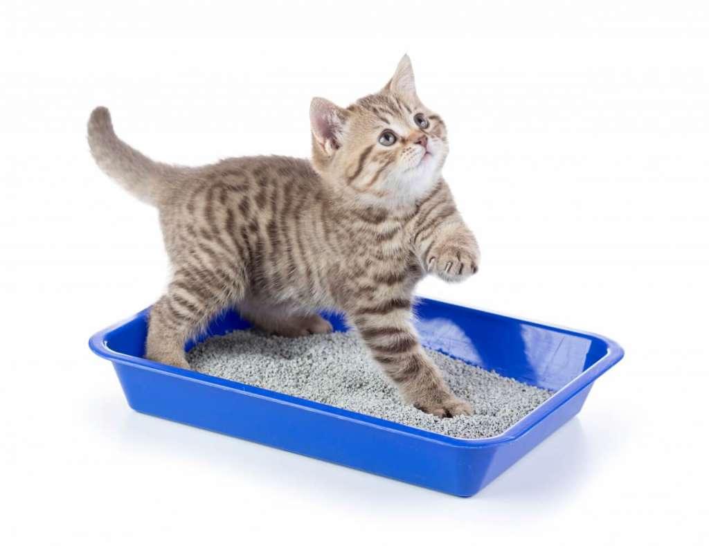 鉱物系の猫砂のメリットとデメリット