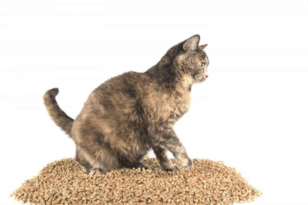 木系の猫砂のメリットとデメリット