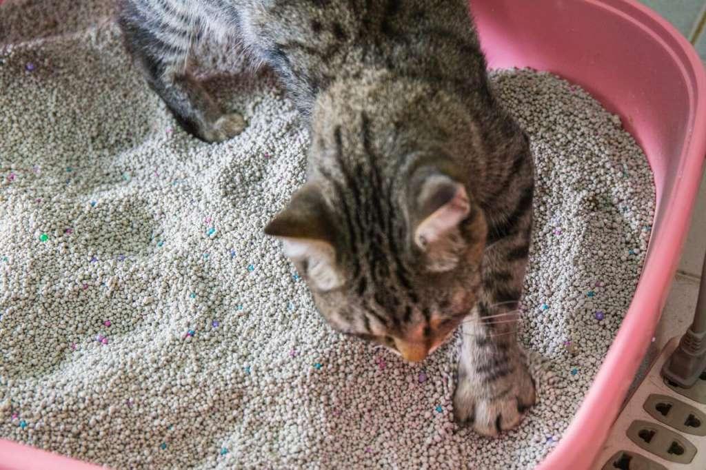 紙系の猫砂のメリットとデメリット