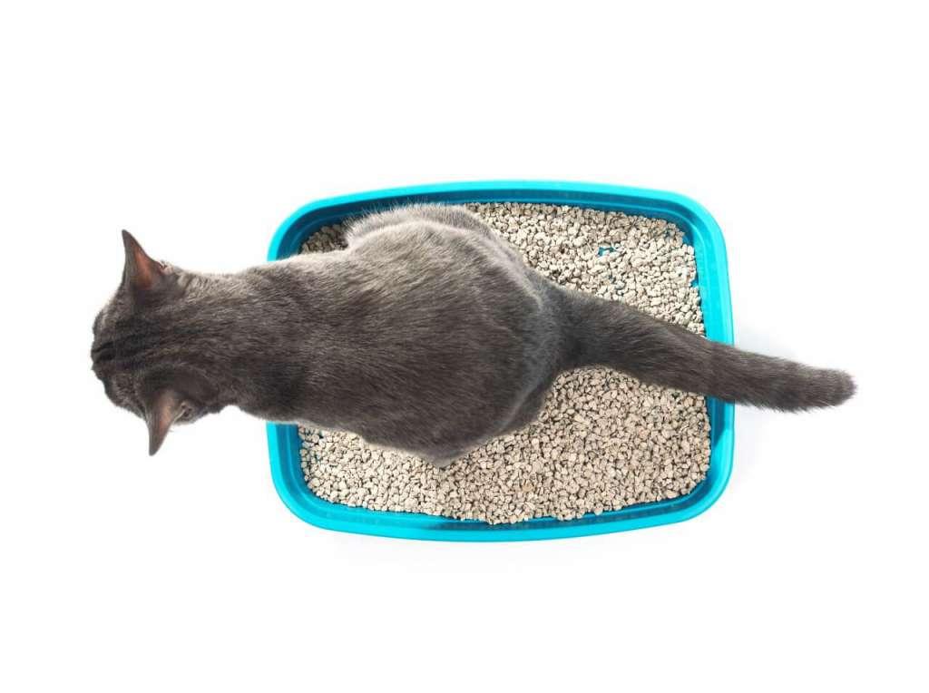 おからの猫砂のメリットとデメリット