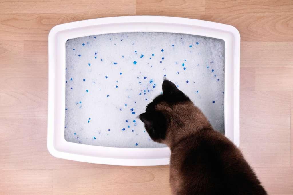 シリカゲルの猫砂のメリットとデメリット