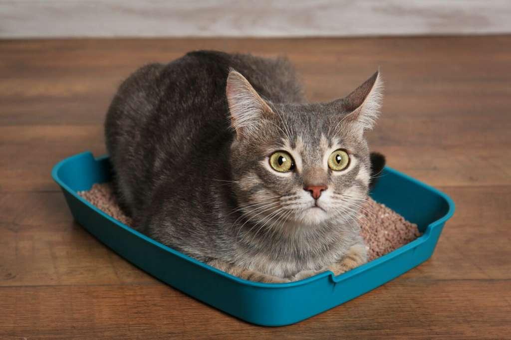 猫砂は、おすすめよりも愛猫に選んでもらうが正解!素材ごとの特性を徹底比較