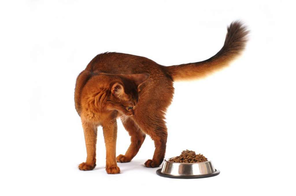 老猫には体重と運動量を考慮してフードを与える