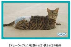 愛猫も飼い主様もより快適に!ねこ用吸収ウェア装着のコツ 『マナーウェアねこ用』履かせ方・慣らせ方を動画で公開