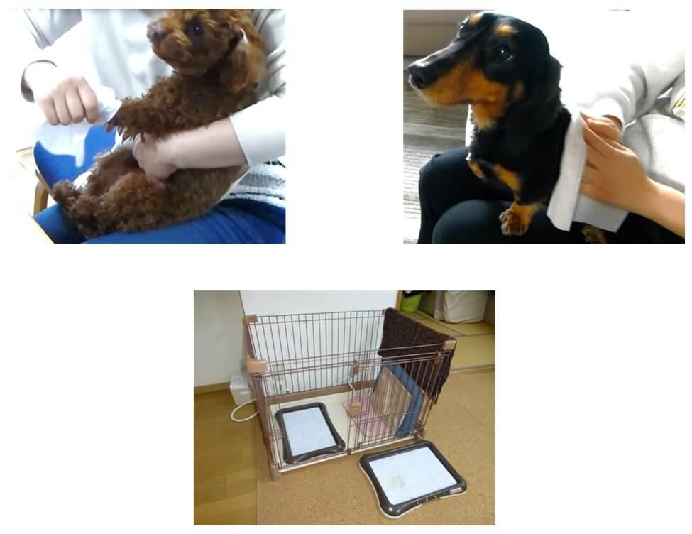 愛犬や愛猫と過ごす多くの時間をより快適に  トイレ回りや散歩後の清潔ケアのポイントを紹介