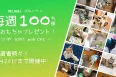 """猫好き専用SNSアプリ「ねこすた」が、愛猫との""""STAY HOME""""を応援!毎週100名に猫おもちゃが当たるイベントが好評開催中、じゃれる猫たちの姿が続々投稿"""