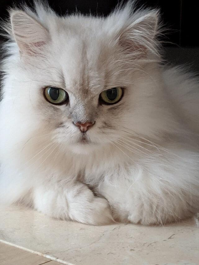 ペットの健康維持をよりカンタン・手軽なものにするサービス「pett」を開始します