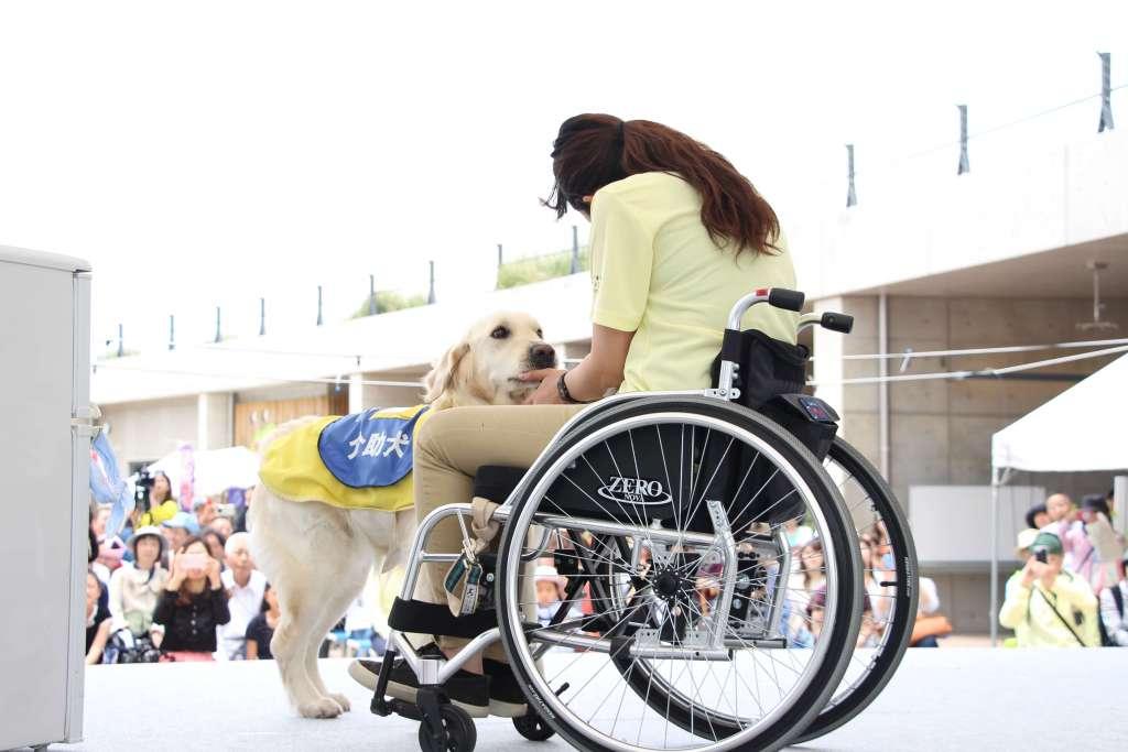 『介助犬フェスタ2020』5月23日(土)13時~ コロナに負けずYouTubeで初のWeb開催へ!