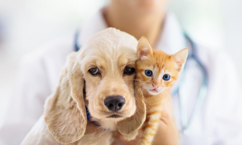 ペットの支出に関する調査~ 年間のペット関連支出4人に1人増加、主な要因は「病気やケガの診療費」~