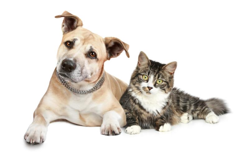 5年分のトレンドも振り返る『ペットの名前ランキング2020』犬「ココ」と猫「レオ」が連覇達成!&令和ネームも増加中