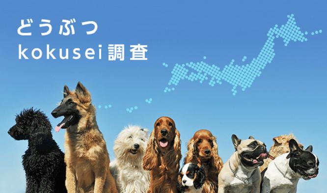 犬の健康寿命延伸を目的とした「どうぶつkokusei調査」結果公表