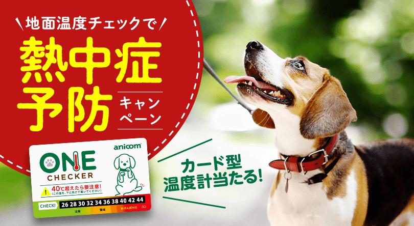 酷暑から愛犬を守る新習慣! 地面温度をチェックして熱中症予防を