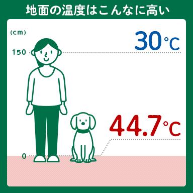 犬も熱中症になる! 犬が過ごす地面付近は、予想以上の高温に