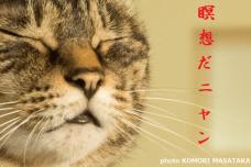 世界一やさしい瞑想入門『ねこ瞑想』~たっぷりの猫写真に癒されながら心と体をリフレッシュ‼