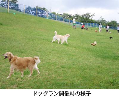 愛犬と過ごす秋の六甲山カンツリーハウス 「六甲山のドッグラン」開催! 9月5日(土)~11月3日(火・祝)の土曜・日曜・祝日