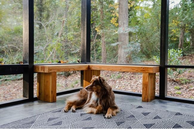 11月1日は犬の日!GoToトラベルを使って、愛犬と一緒にAirbnbで旅行に出かけてみよう