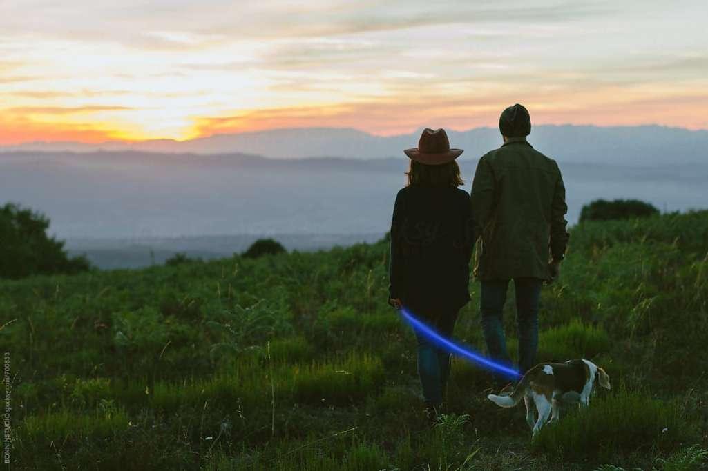 愛犬との夜のお散歩を楽しく快適に「NIGHT SCOUT LED Dog Series」登場