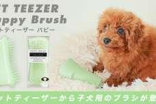 子犬用ブラシ「ペットティーザー パピー」