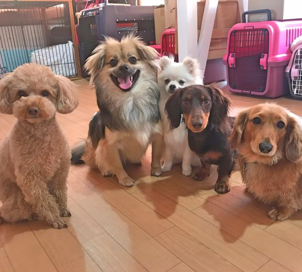 コロナ禍でペットの飼育放棄が急増!? 100%ほめる犬のしつけ教室に問合せが殺到、3倍以上の申込み
