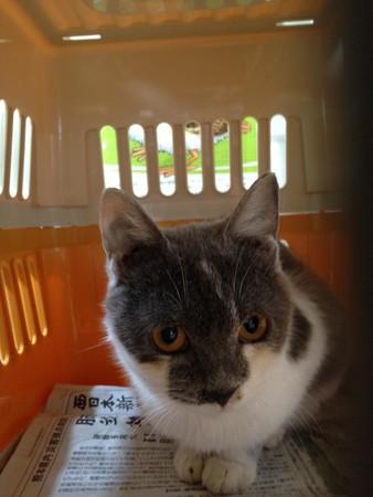 動物避難所を全国に作りたい!獣医師ら、全国動物避難所マップ、ふるさと納税で作成へ。