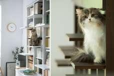 ディノスより、猫の飼い主のお悩みを解決する家具を新発売