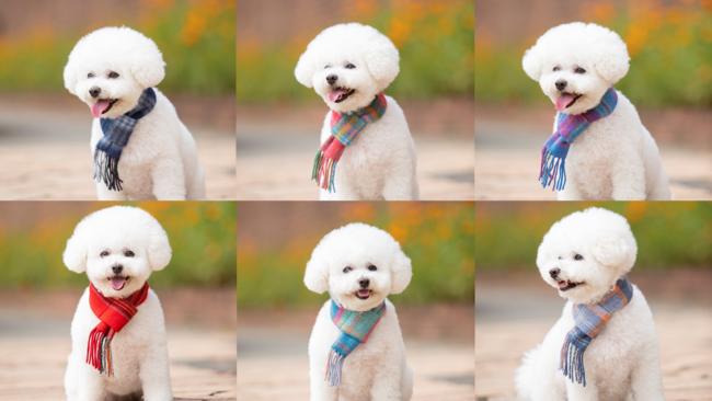 INUTO Autumn&Winter2020「犬とのおそろいを楽しもう」いよいよ12月1日より販売開始