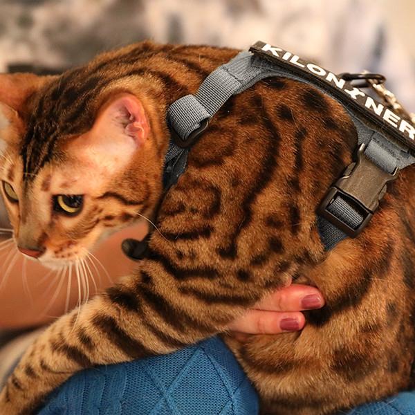 軽くて快適な着け心地で猫隊員にも人気