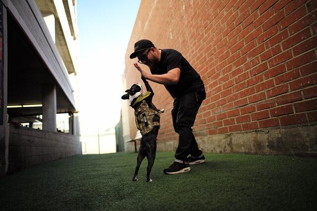 デザイナーと愛犬のMUGI