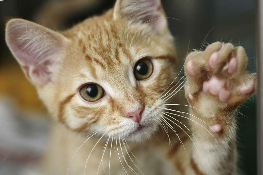 """今年も2月は毎日 """"にゃんこづくし"""" アニマルプラネットの大人気特集「2月は、にゃんと!猫の月」で癒し系から弱肉強食まで様々な猫の番組を一挙大放出!"""