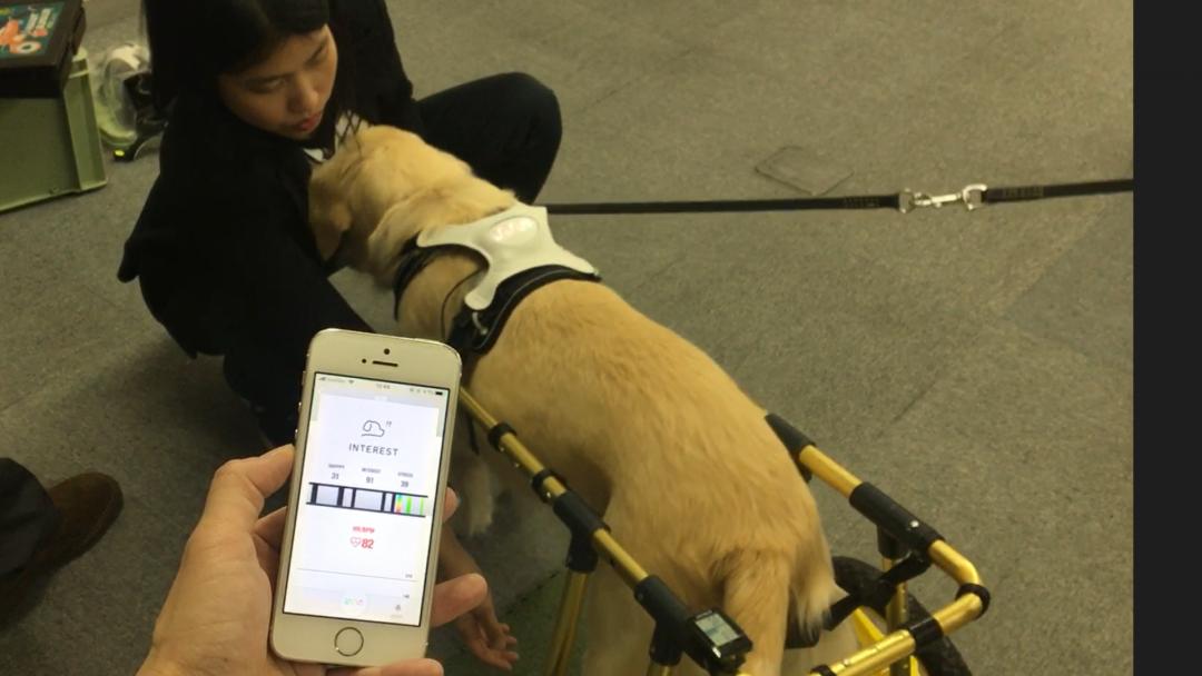 導入事例:海外獣医師によるペット福祉用機器開発