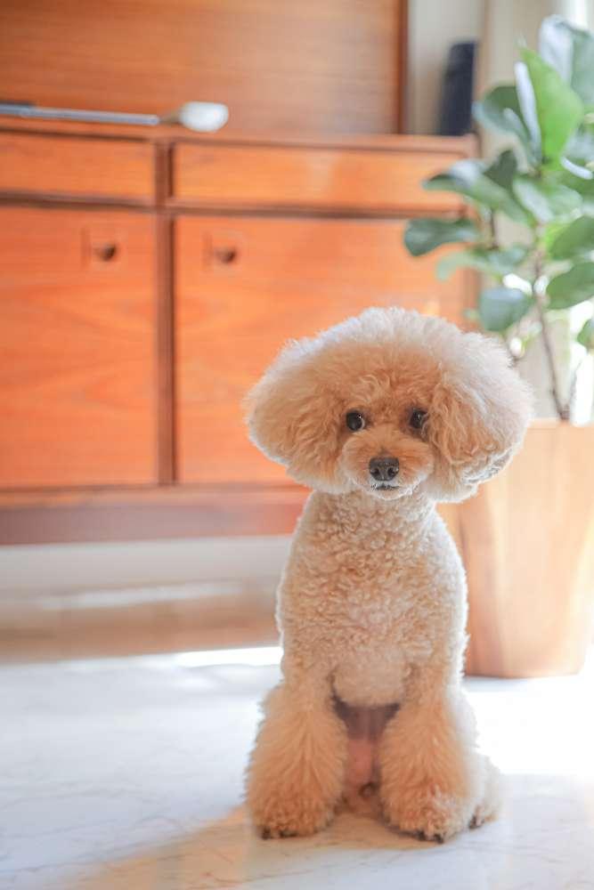 ブライダル撮影最大手のデコルテが、愛犬専用フォトブランド「dogbirthday」をリリース!