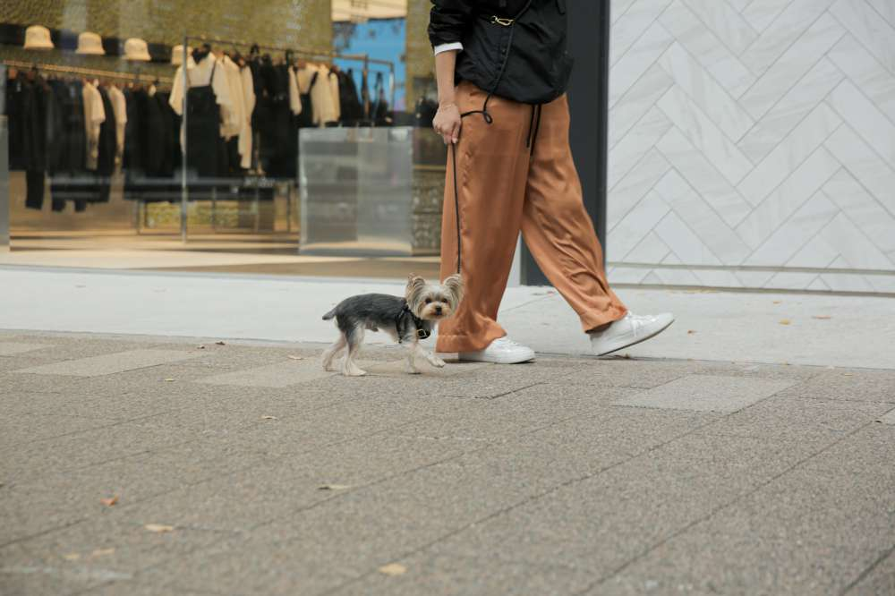 また、dogbirthdayでは売り上げの一部を保護団体に寄付。
