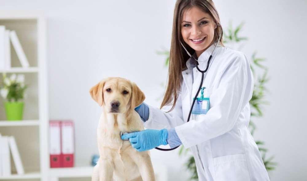 獣医用CRO市場は、2027年まで7.7%のCAGRで目覚ましい成長が見込まれています