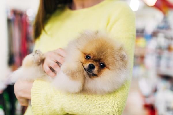 2020年に犬を迎えた114人に聞いた!迎えたきっかけは?「コロナの影響」が1位に…!
