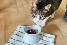 猫のためのジビエフード「猫のジビエ」