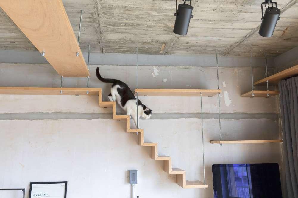 """【2月22日は「猫の日」】猫と暮らす方約300人に聞いた """"困りごと"""" も """"現在の工夫"""" も """"工夫したいこと"""" も、とにかく「トイレ」! 70%超がコロナ禍で猫との暮らしにポジティブな変化を実感"""